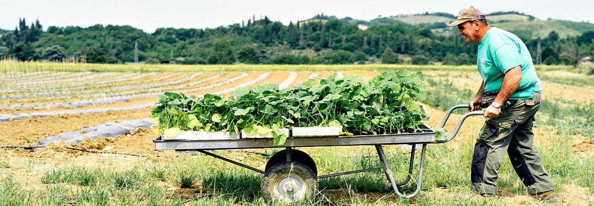 Agricoltura sociale e biologica