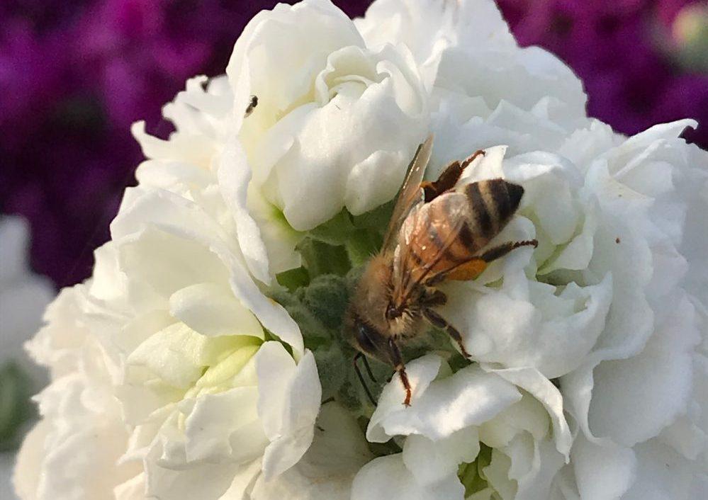 Il volo dell'ape vol.3